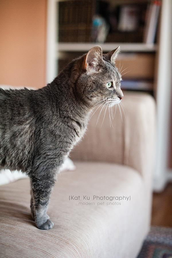 Adopt Jodie_Kat Ku Photography_02