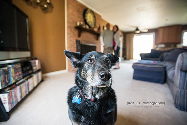 Kat Ku - Dexter Michigan Dog and Pet Photography_ 04