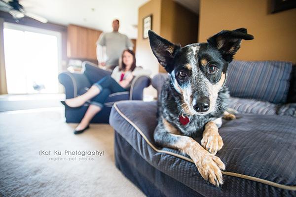 Kat Ku - Dexter Michigan Dog and Pet Photography_ 07