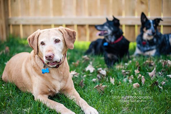 Kat Ku - Dexter Michigan Dog and Pet Photography_ 10