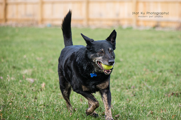 Kat Ku - Dexter Michigan Dog and Pet Photography_ 14