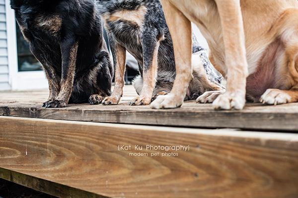 Kat Ku - Dexter Michigan Dog and Pet Photography_ 19