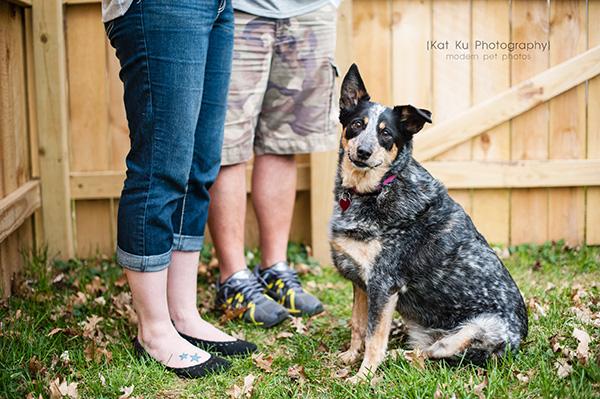 Kat Ku - Dexter Michigan Dog and Pet Photography_ 21