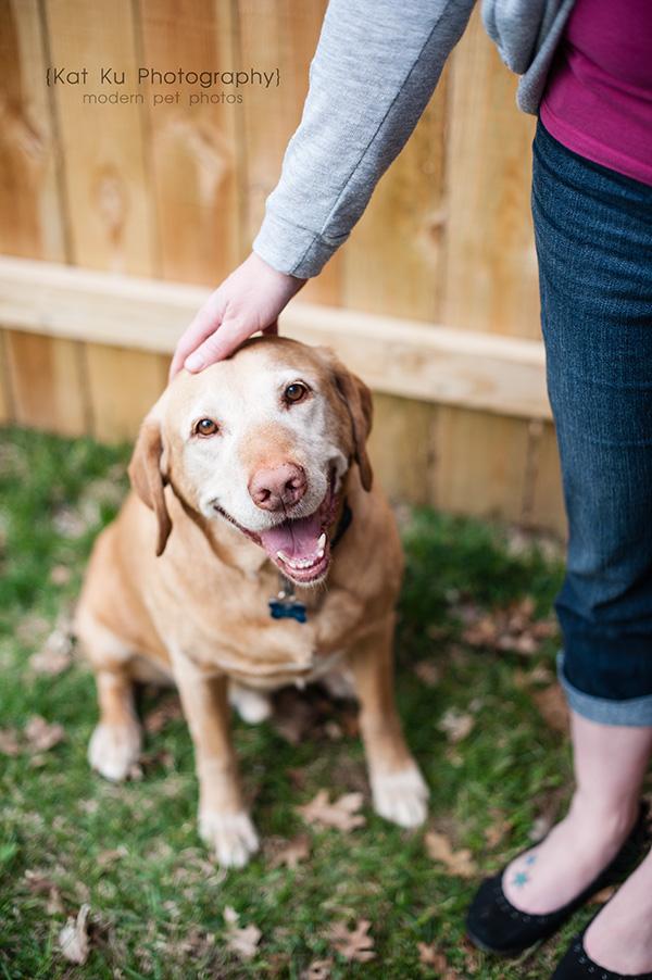 Kat Ku - Dexter Michigan Dog and Pet Photography_ 23