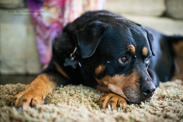 Kat Ku Photography_Canton Pet Photography_05