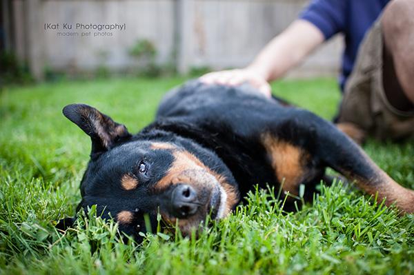 Kat Ku Photography_Canton Pet Photography_15
