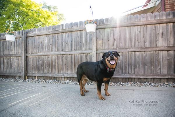 Kat Ku Photography_Canton Pet Photography_23