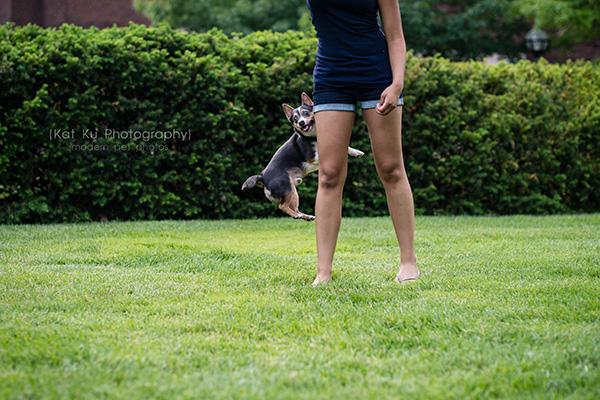 Kat Ku Photography_Dasher the Corgi Mix_11