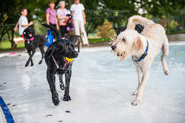 Kat Ku Photography_Ann Arbor Buhr Park_Dog Swim_04