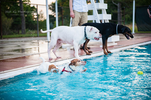 Kat Ku Photography_Ann Arbor Buhr Park_Dog Swim_09