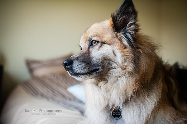 Kat Ku Photography_MoMo_Novi Pet Photography_02