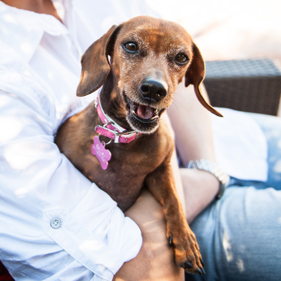 Kat Ku Photography - Bailey Dachshund Scottsdale
