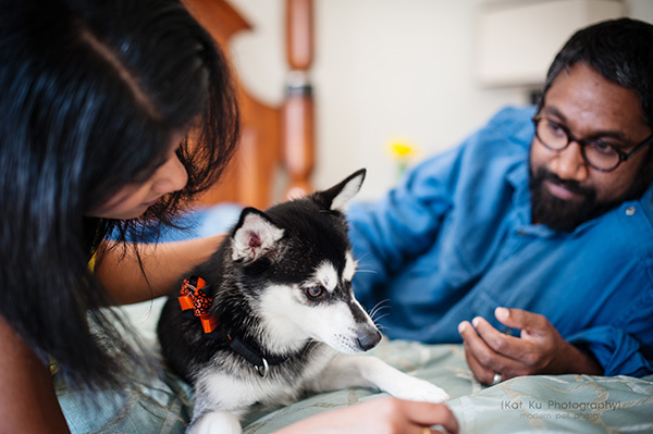 Kat Ku_Troy Pet Photos_Alaskan Klee Klai_10