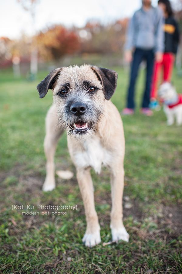Olsen Dog Park_Kat Ku Photography_Ann Arbor_07