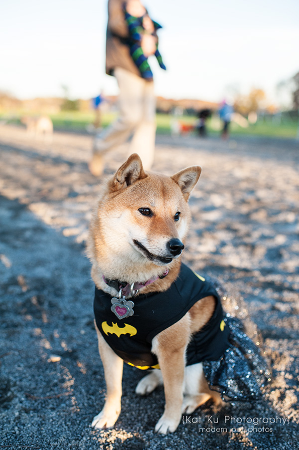 Olsen Dog Park_Kat Ku Photography_Ann Arbor_09