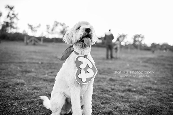 Olsen Dog Park_Kat Ku Photography_Ann Arbor_12