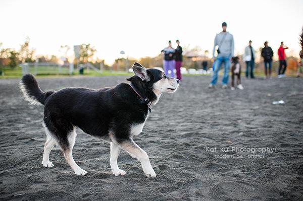 Olsen Dog Park_Kat Ku Photography_Ann Arbor_15