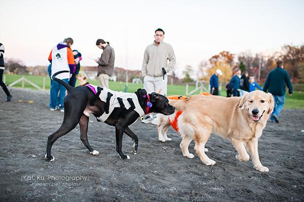 Olsen Dog Park_Kat Ku Photography_Ann Arbor_18