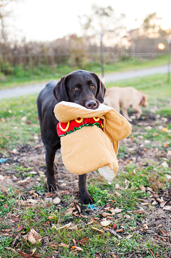 Olsen Dog Park_Kat Ku Photography_Ann Arbor_22