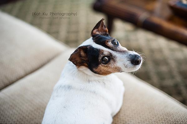 Kat Ku_Brighton Pet Photography_04