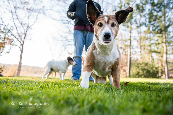 Kat Ku_Brighton Pet Photography_11