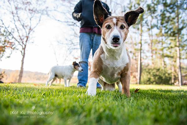 Kat Ku_Brighton Pet Photography_11