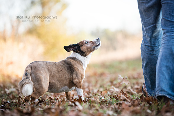 Kat Ku_Brighton Pet Photography_12