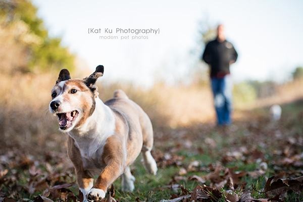 Kat Ku_Brighton Pet Photography_14