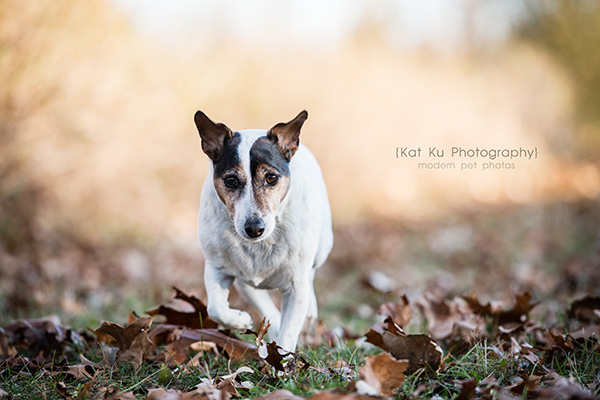 Kat Ku_Brighton Pet Photography_15