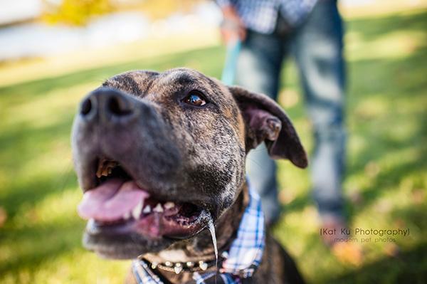 Kat Ku_Delilah and Tucker_Michigan Pets_16