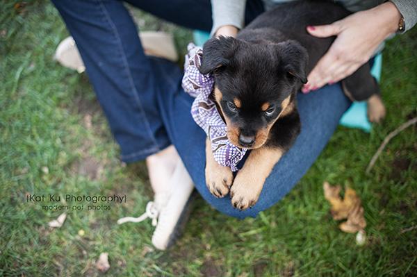 Kat Ku_Gia Rottweiler Puppy_22