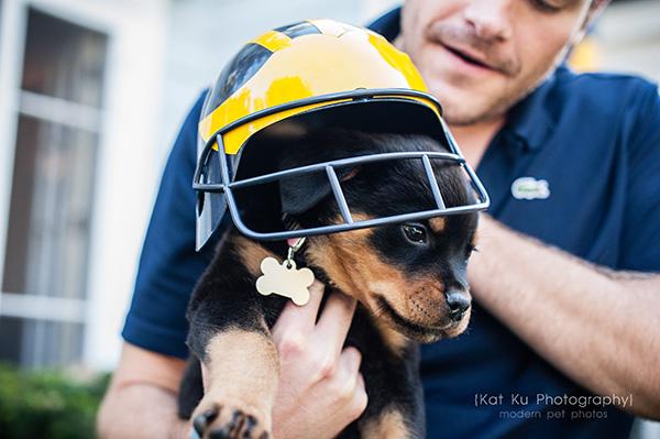 Kat Ku_Gia Rottweiler Puppy_25