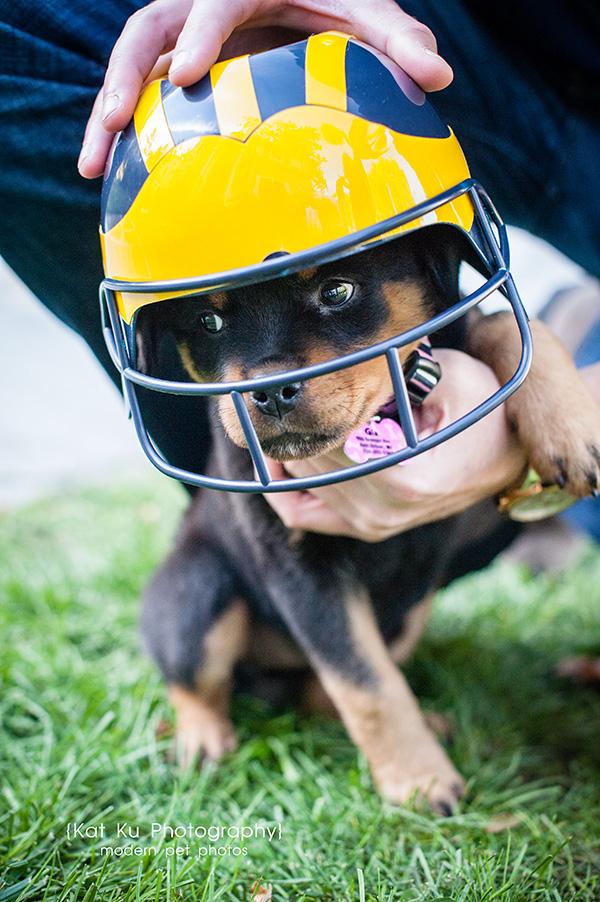 Kat Ku_Gia Rottweiler Puppy_26