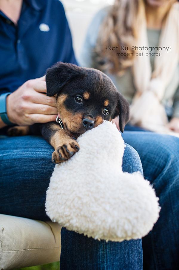Kat Ku_rottweiler puppy_ann arbor