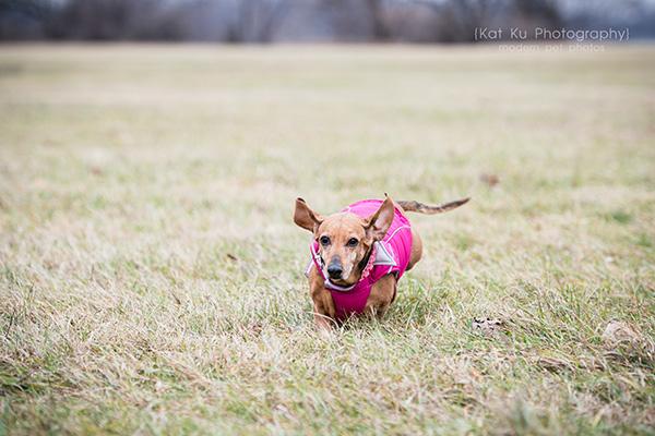 Kat Ku_Noodle_Pet Photography_20