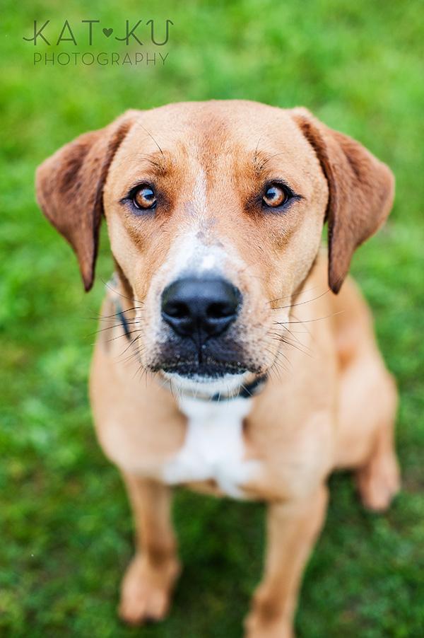 Kat Ku Pet Photography_Humane Society of Huron Valley_Walk and Wag_01