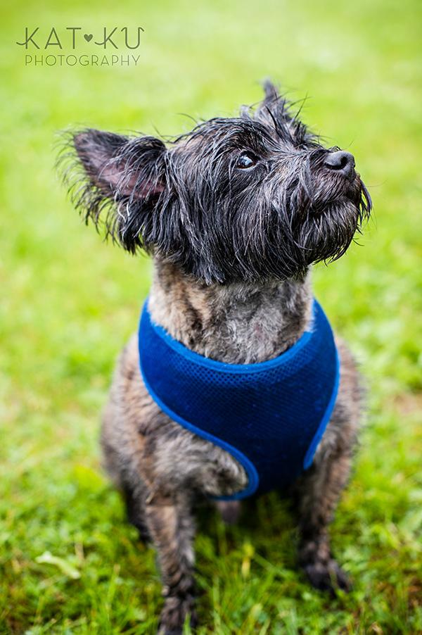 Kat Ku Pet Photography_Humane Society of Huron Valley_Walk and Wag_04