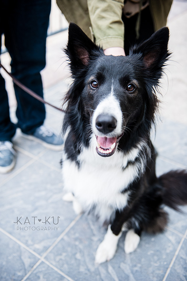Kat Ku Photography_Dogs of Detroit_Campus Martius_07