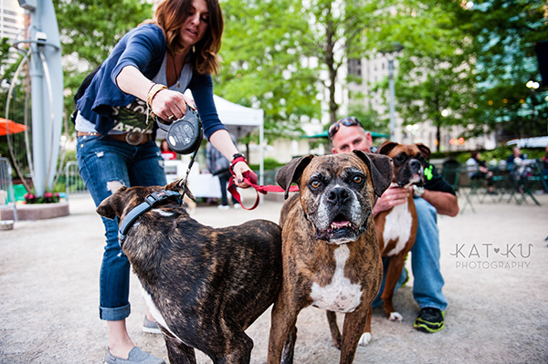 Kat Ku Photography_Dogs of Detroit_Campus Martius_08