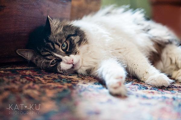 Kat Ku_Sunny_Cat Photography_08