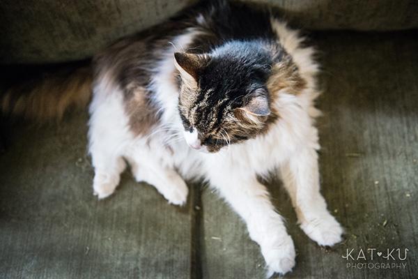 Kat Ku_Sunny_Cat Photography_09