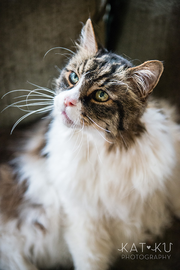 Kat Ku_Sunny_Cat Photography_14