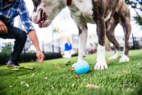 Kat Ku Photography_Detroit Pet Photos_Auggie_03