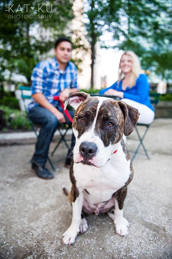 Kat Ku Photography_Detroit Pet Photos_Auggie_09