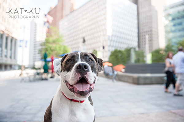 Kat Ku Photography_Detroit Pet Photos_Auggie_11