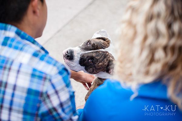 Kat Ku Photography_Detroit Pet Photos_Auggie_12