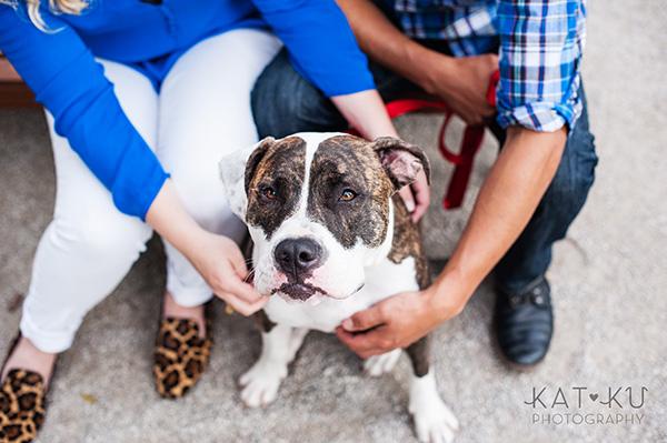 Kat Ku Photography_Detroit Pet Photos_Auggie_14