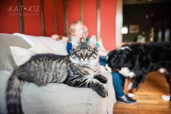 Kat Ku_Bernese Mountain Dog_Detroit Pet Photography_06