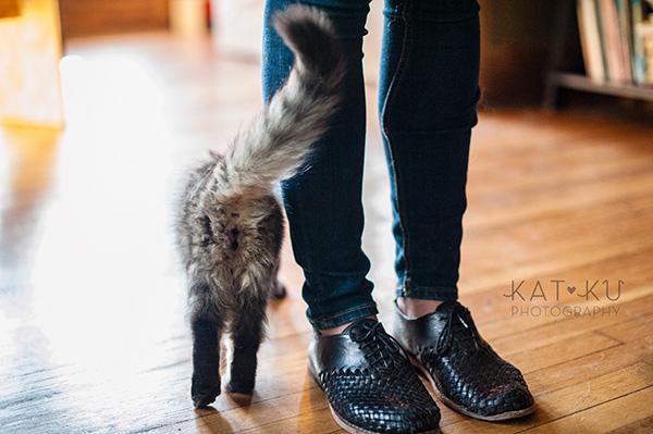 Kat Ku_Bernese Mountain Dog_Detroit Pet Photography_10
