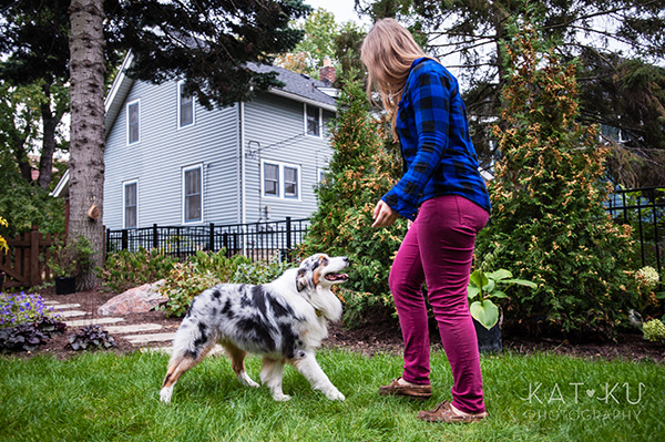 Kat Ku Photography - Ivan Australian Shepherd Royal Oak Michigan_05